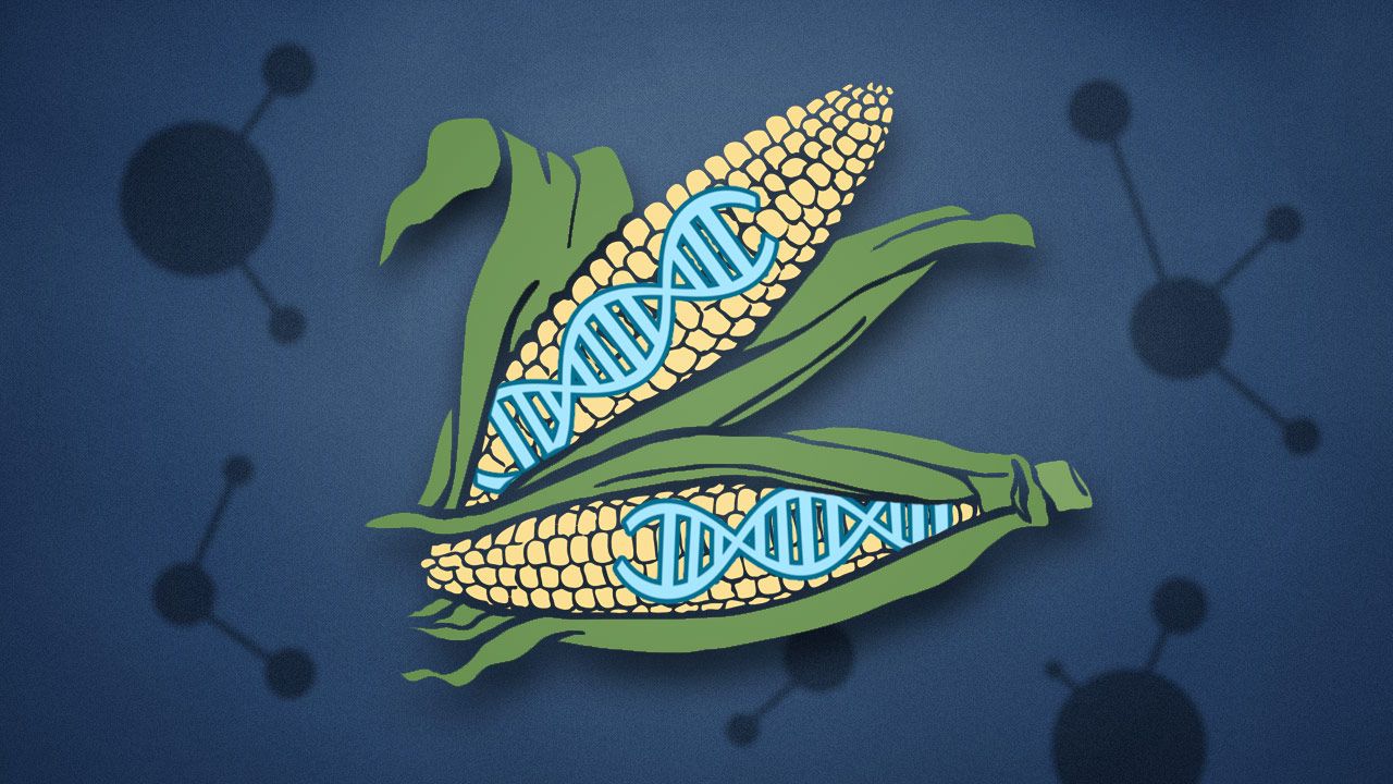 The Biggest Concerns About GMO Food Aren't Really About GMOs